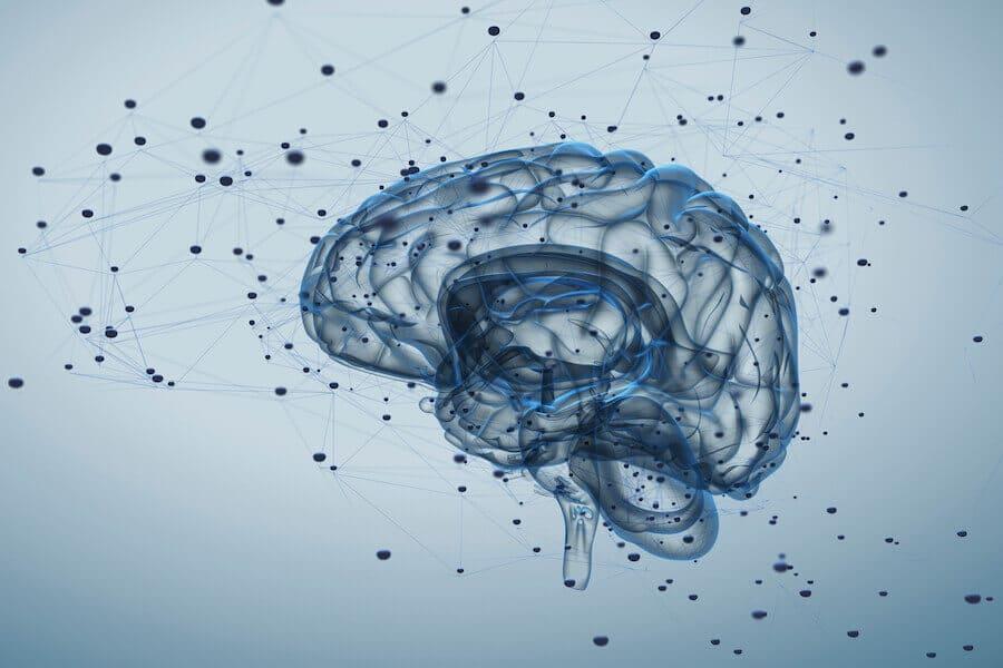 Trabajo arquitectos Cerebro